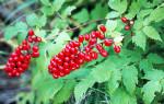 Воронец: описание видов и уход за растением