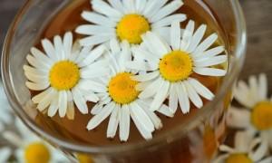 Настойка ромашки: применение, польза и рецепты