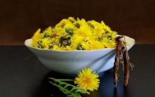 Экстракт корня одуванчика: свойства, рецепты и применение