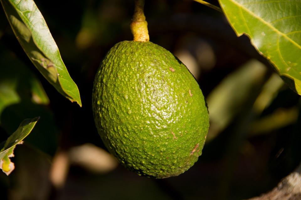 Авокадо применение
