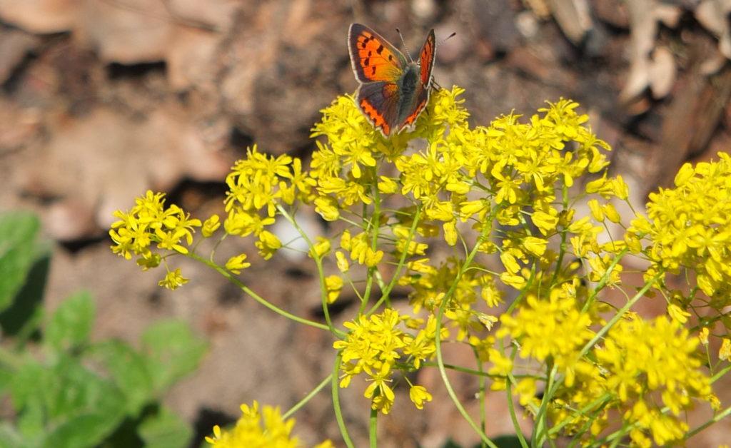 Фото вайды с бабочкой