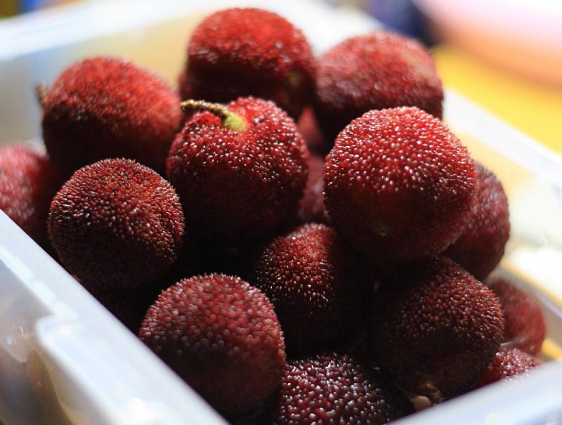 Собранные плоды восковницы