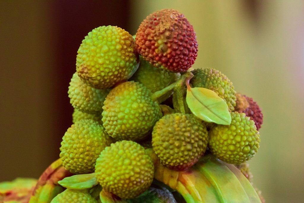 Зеленые плоды восковницы